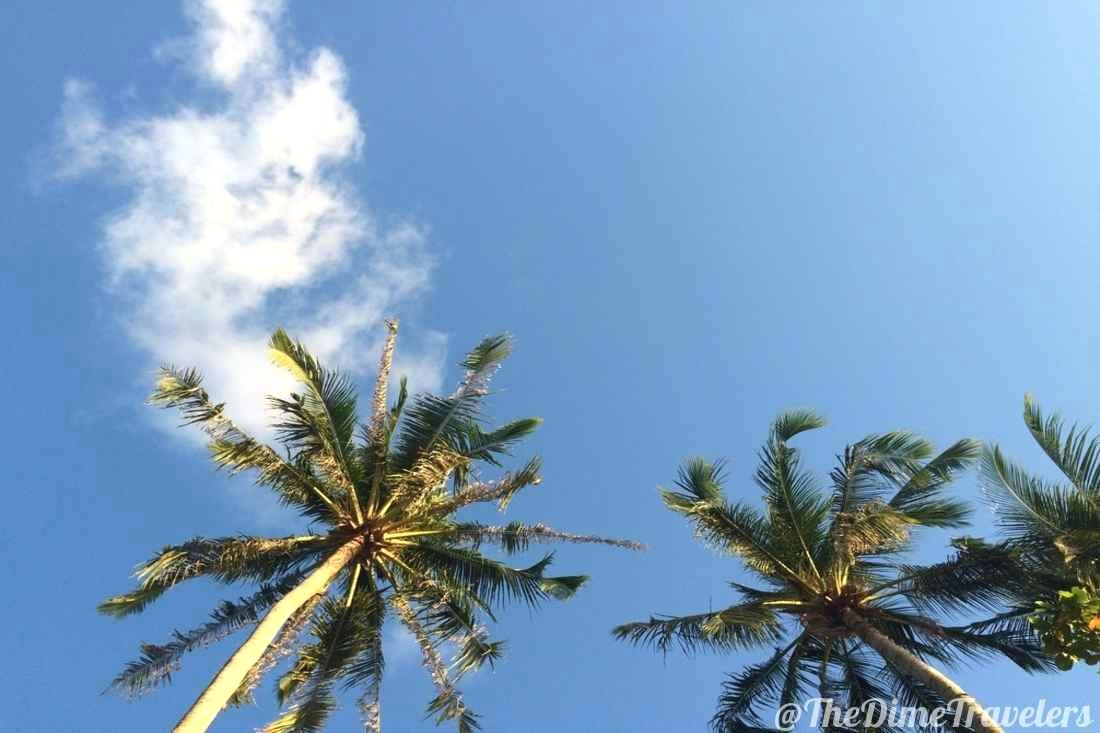 Palm Trees in the sky on the beach in Thailand